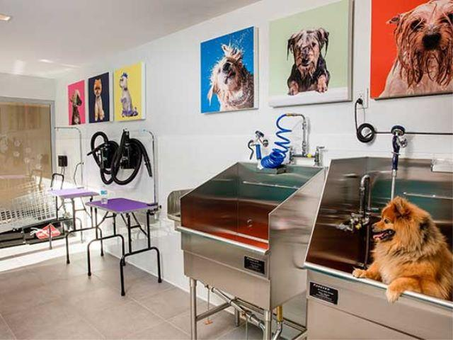 Pet Spa at Avalon Willoughby Square - Apartments for rent